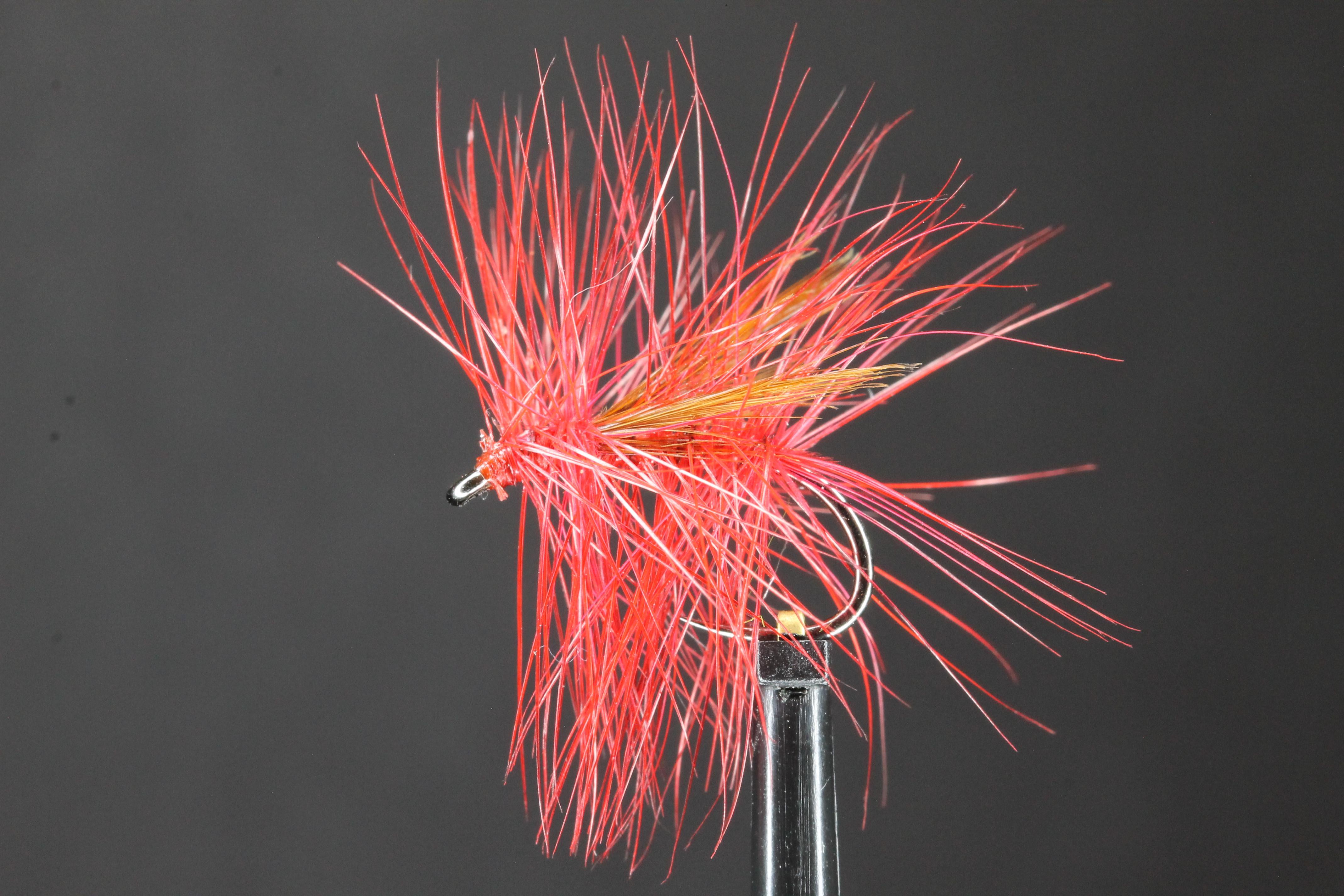 Great Red Sedge