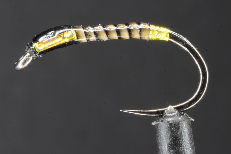 Gold Butt Black Quill Buzzer