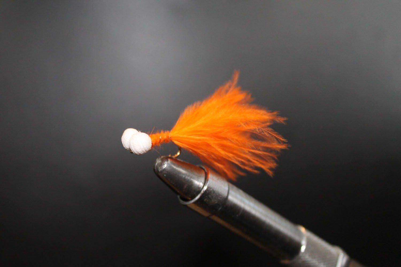 Orange Booby