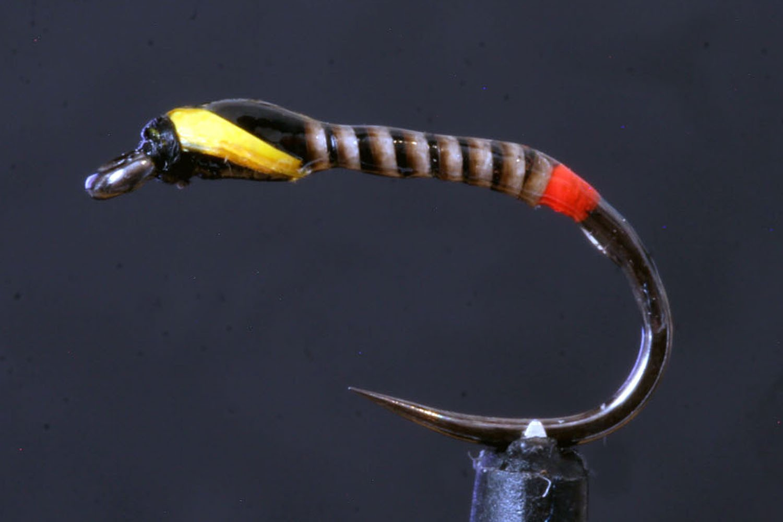 Red Butt Black Quill Buzzer