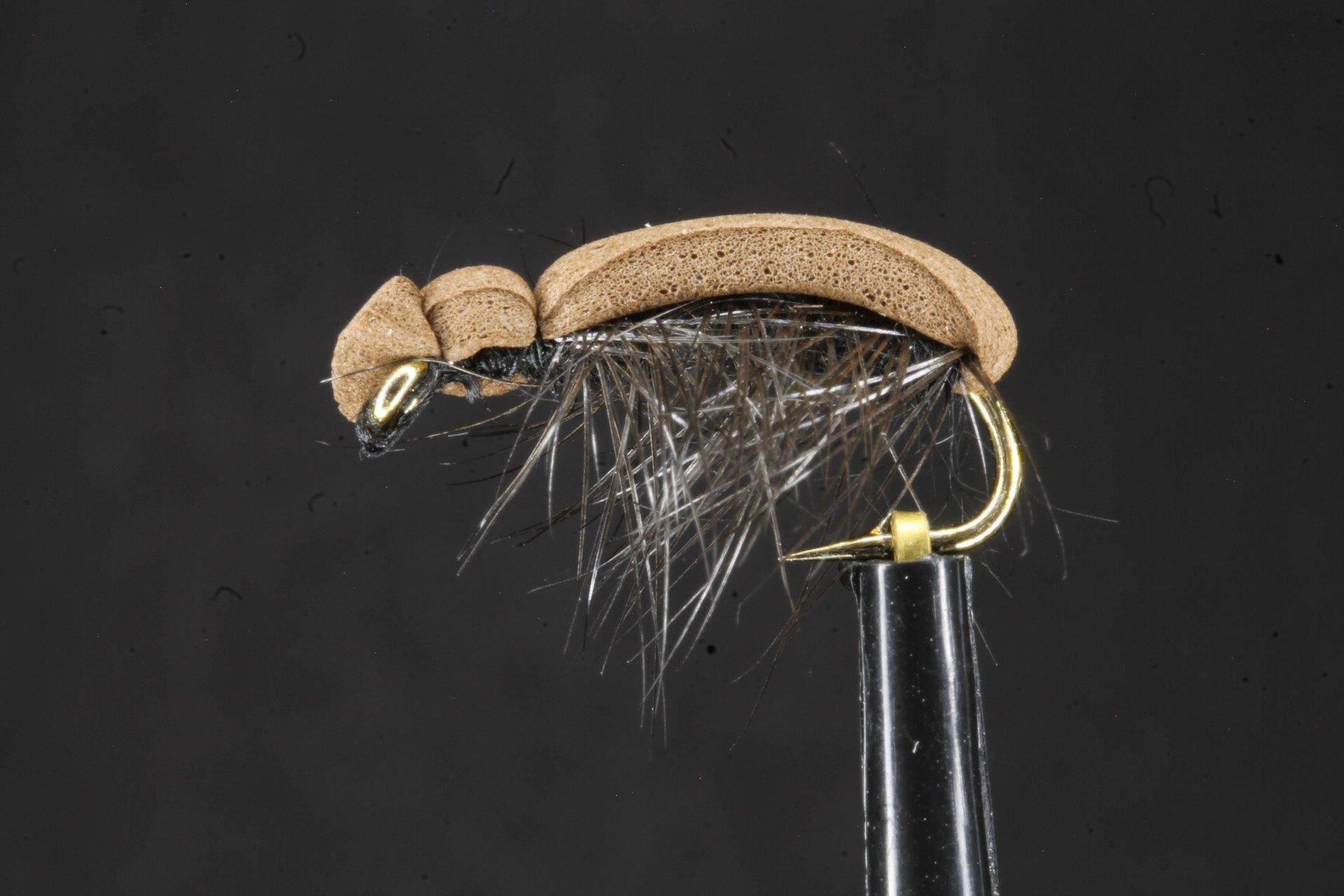 Bracken Clock Beetle