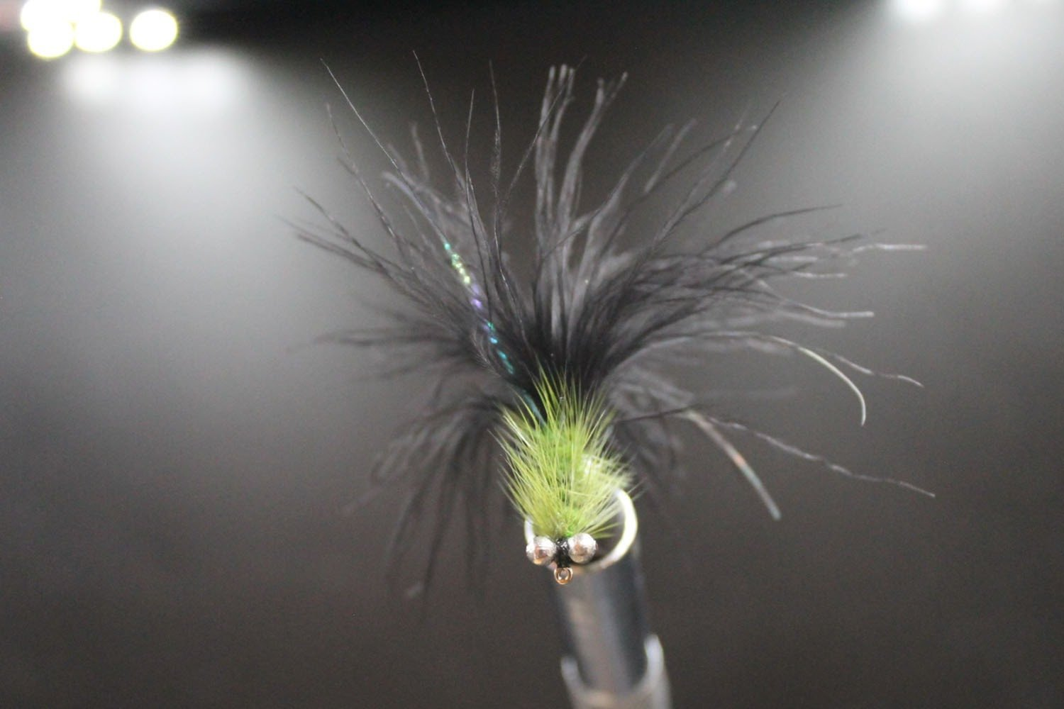 Olive and Black Humungous