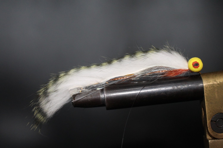 Green Mackerel Barred Booby Snake